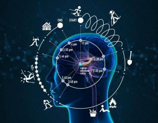 "Scientists discover a ""neural clock"" deep inside the human brain"
