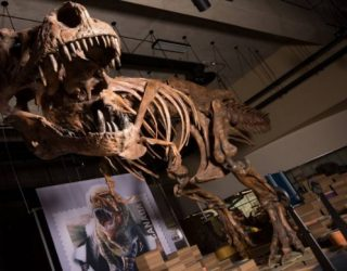 Stunning Fossil Discovery Captures the Moment Dinosaurs Were Killed