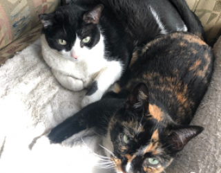 NEWS FROM FANDOM: March 24, 2019