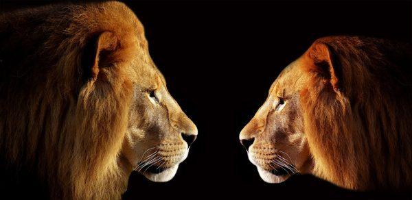 lion-3057316_960_720-600x292.jpg
